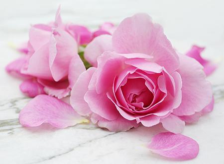 HILDEGARD BRAUKMANN Rosa gallica