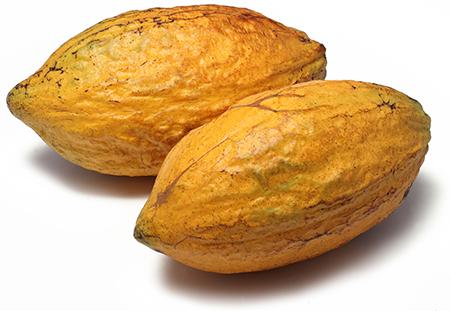HILDEGARD BRAUKMANN Kakaobutter