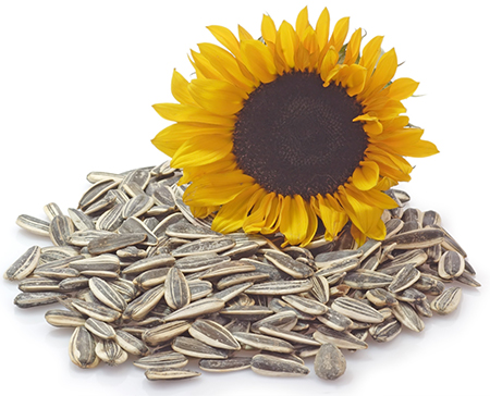 HILDEGARD BRAUKMANN Sonnenblumenöl