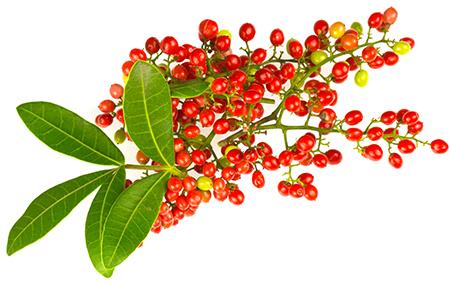 HILDEGARD BRAUKMANN Brasilianischer Pfefferbaum